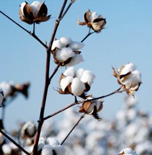 What Are Eco Textiles & How Do We Define Being Ethical?