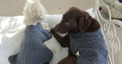 Are Your Hounds The Talk Of The Town? DIY Super Chic Dog Coats!