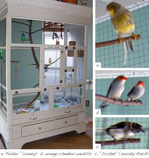 Upcycling In The Home - Creating an aviary from an old wardrobe